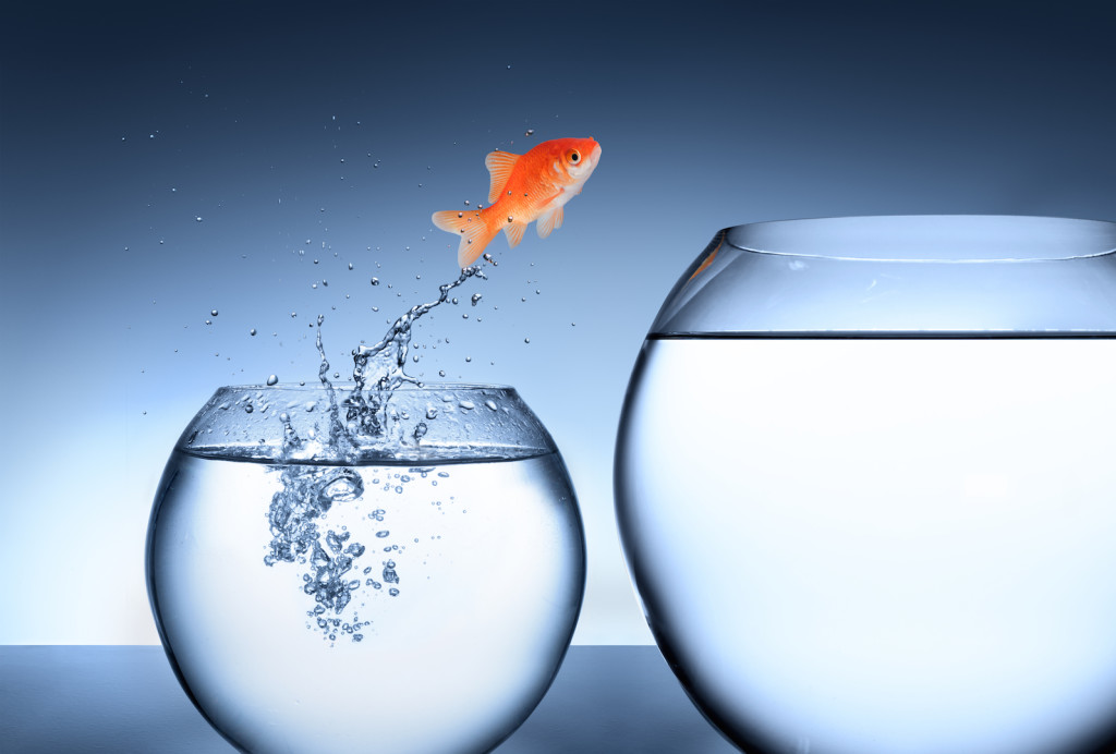 shutterstock_178281617 jumping fish small